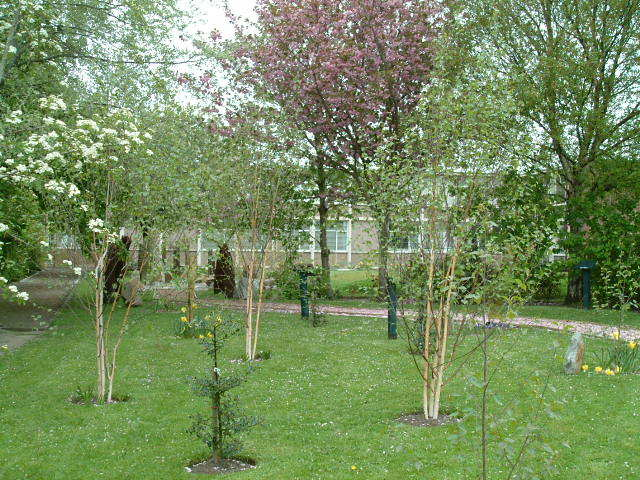 Orchard area of sensory garden
